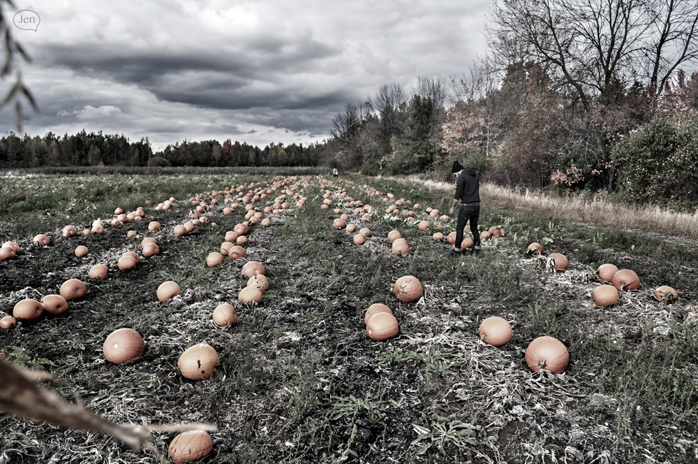 Black and white pumpkin season 03